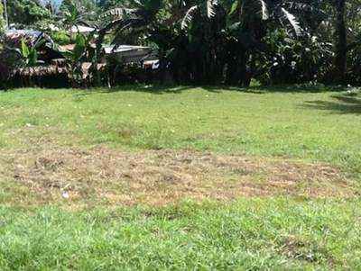 Land for sale in Madang Madang