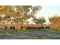 Western Breeding/Grazing/Irrigation Solution