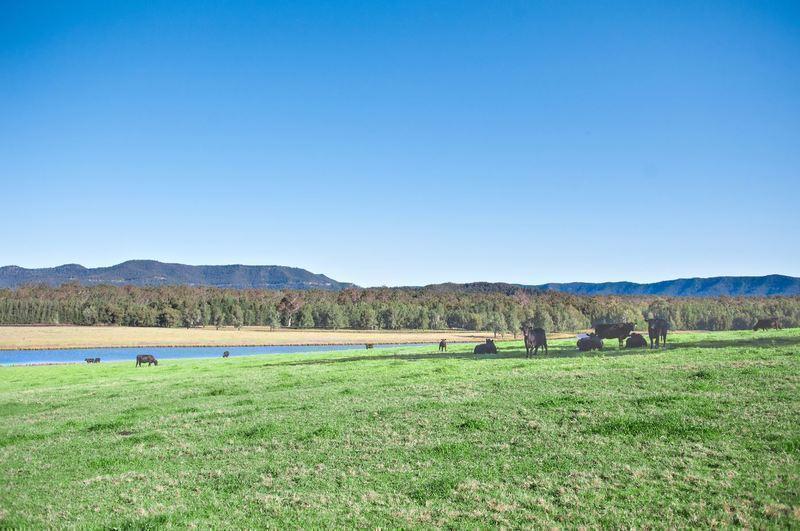 Land for sale PAXTON NSW 2325 | myland.com.au