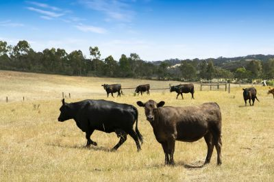 Exceptional valley views      100 Acres - 40 ha (approx)