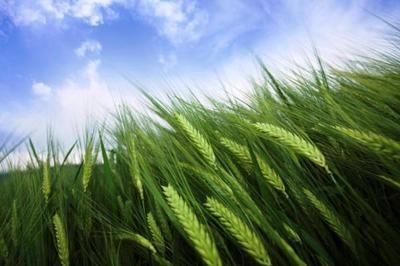 Farmland (Grains) – Ref: 5590