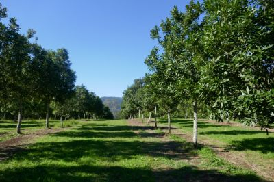 lot 2 forest road, kyogle