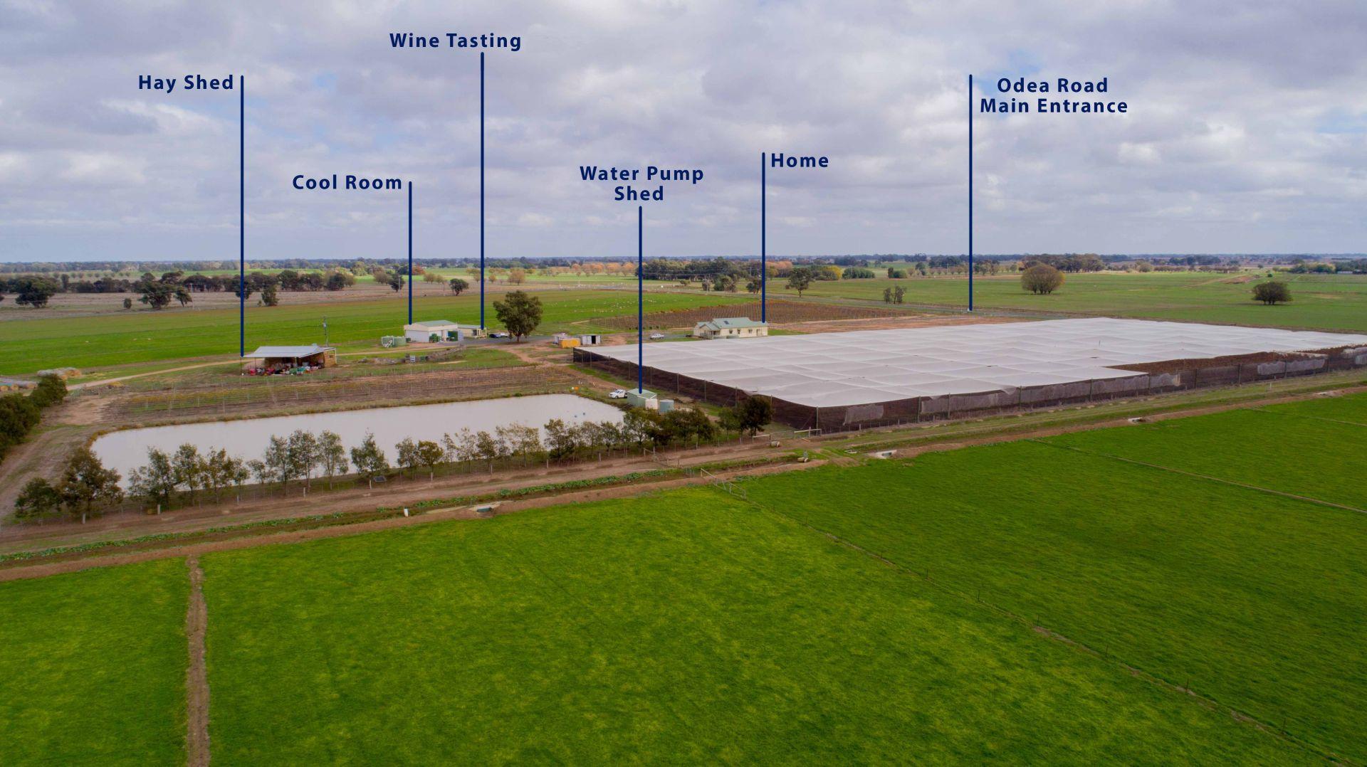 A Diverse Commercial Farm