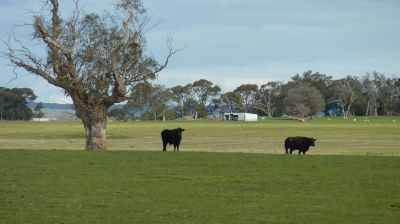 Scenic Rural Holding 15.78ha 39 acres approx.