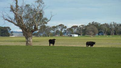 Scenic Rural Holding