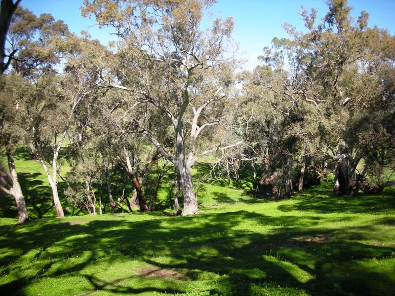 For Sale By Owner: Lot 9 Leaney Court, Penrice, SA 5353