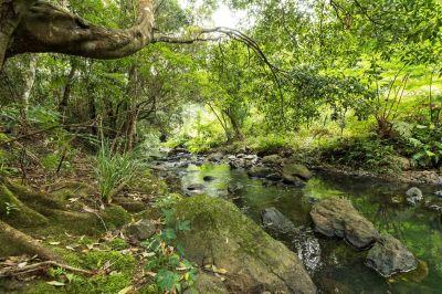 Creek frontage land