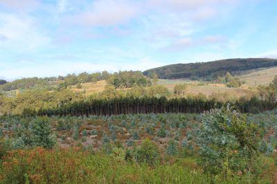 49 acres mostly level land