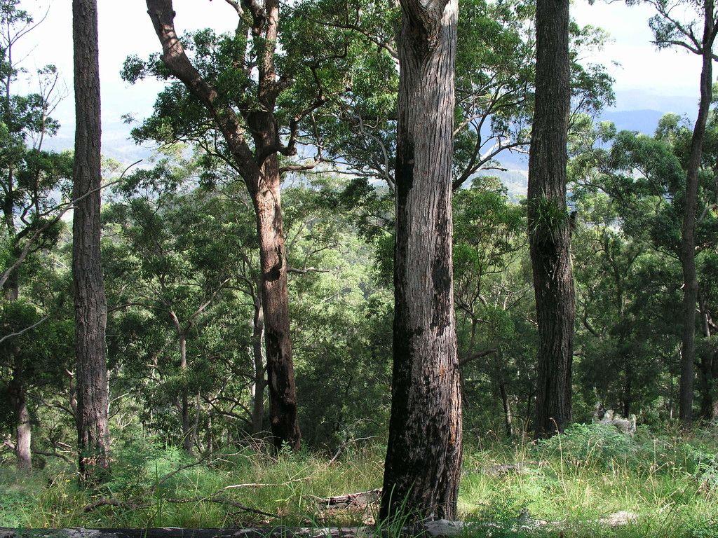 Lot 204 Misty Vale Way, HOLLISDALE NSW 2446
