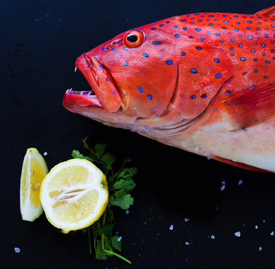 Fresh Seafood Business with direct Supply- MAKE AN OFFER