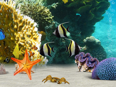 4 Day  Aquarium in the South East  - Ref: 9995