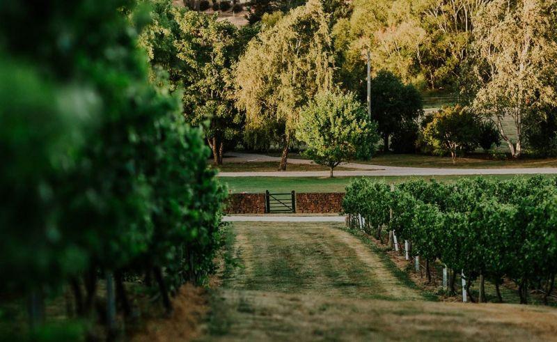 3 Willows Vineyard