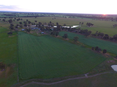 295 ACRE IRRIGATED LIVESTOCK AND CROPPING FARM, ISOLATE WITHOUT BEING ISOLATED