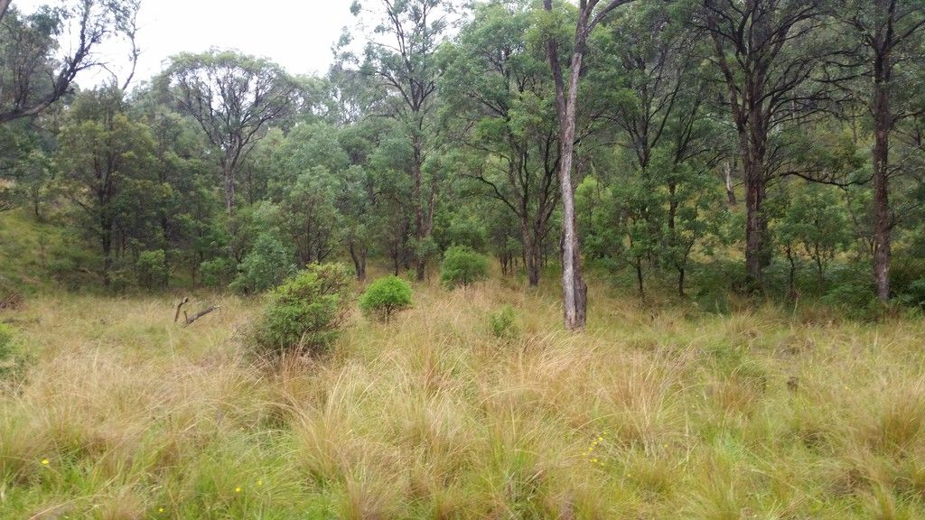 1715 Kangaroo Flat Road, YARROWITCH NSW 2354