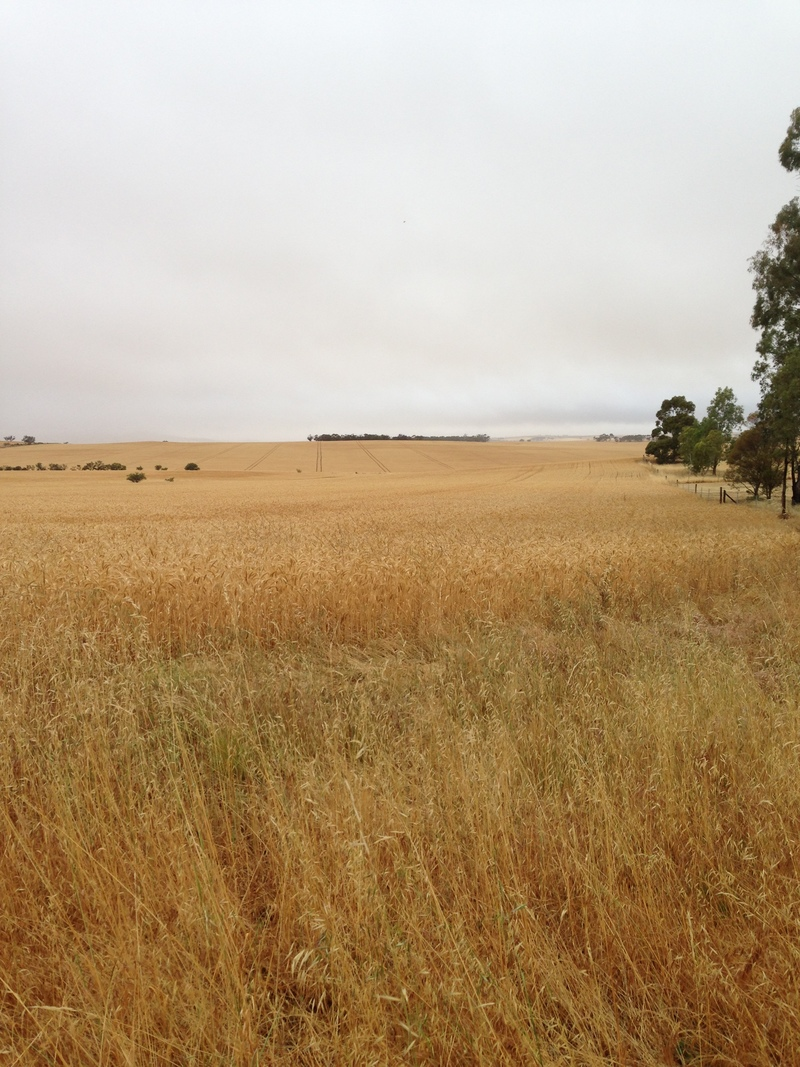 For Sale By Owner: Lot 23 Main Street, Huddleston, SA 5523
