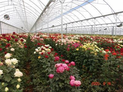 Well reputed flower farm business with freehold in SE - Ref: 19626