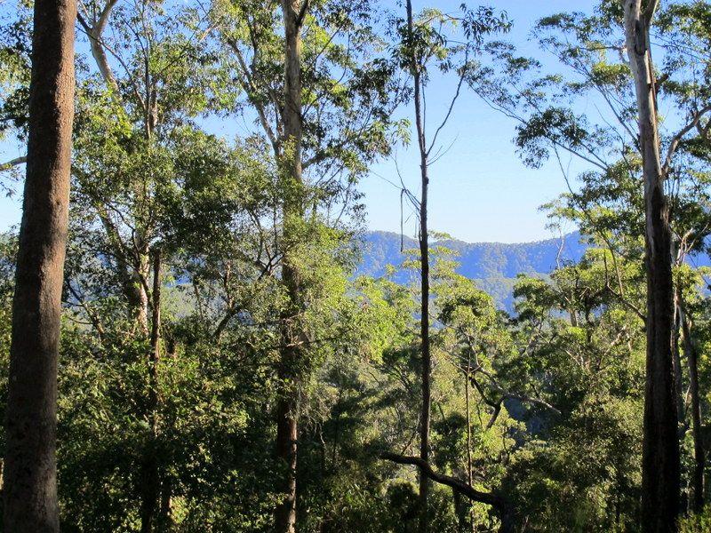 410 Acres of Rainforest & Seclusion