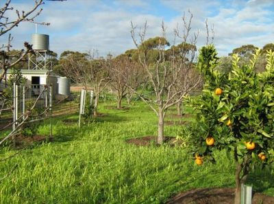 Organic Garden and Home - Are you this Special Person or Family ?