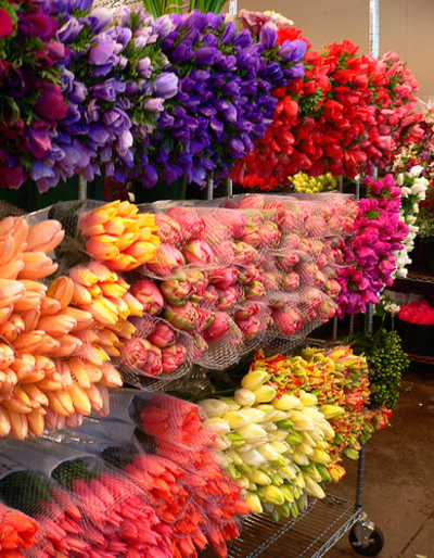 Well Established Flower Wholesale Business - Ref: 10237