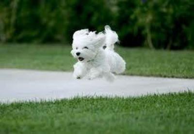 Dog Grooming Near Surrey Hills (5 Days!) - Ref: 18120