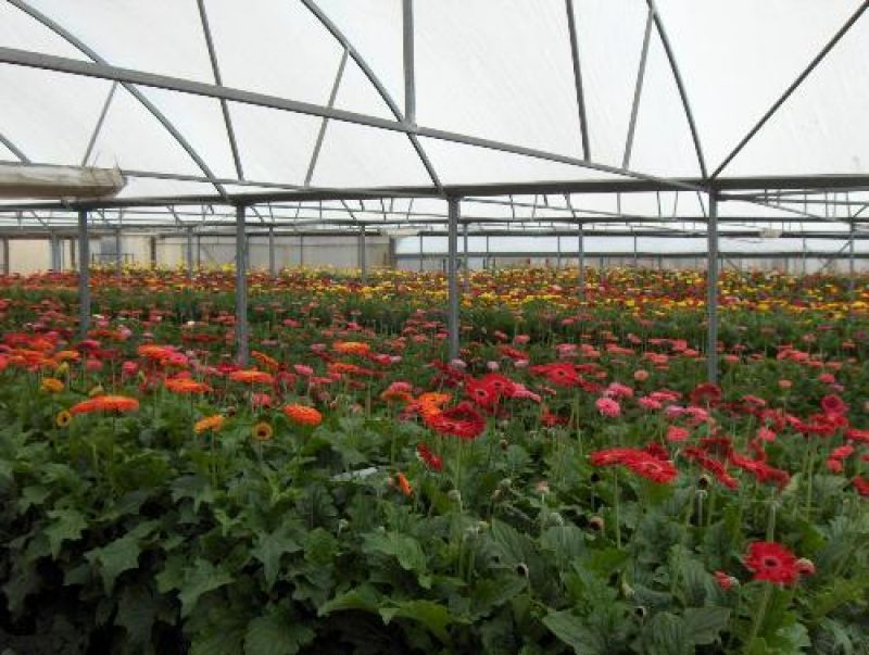 ATTENTION INVESTORS / OCCUPIERS! - FREEHOLD HYDROPONIC WHOLESALERS WITH RESIDENCE - PRIME LOCATION