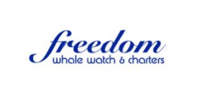 Freedom Iii Whale Watch And Charters Hervey Bay