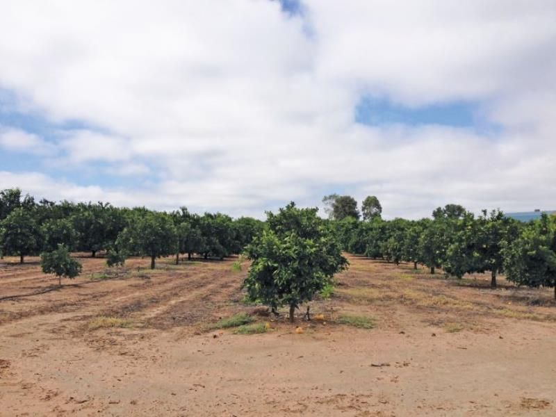 Established Fruit Businesses Plus 3 Properties on 30 Acres