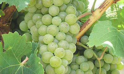 Winery/Vineyard Near Mt Beauty - Ref: 19220