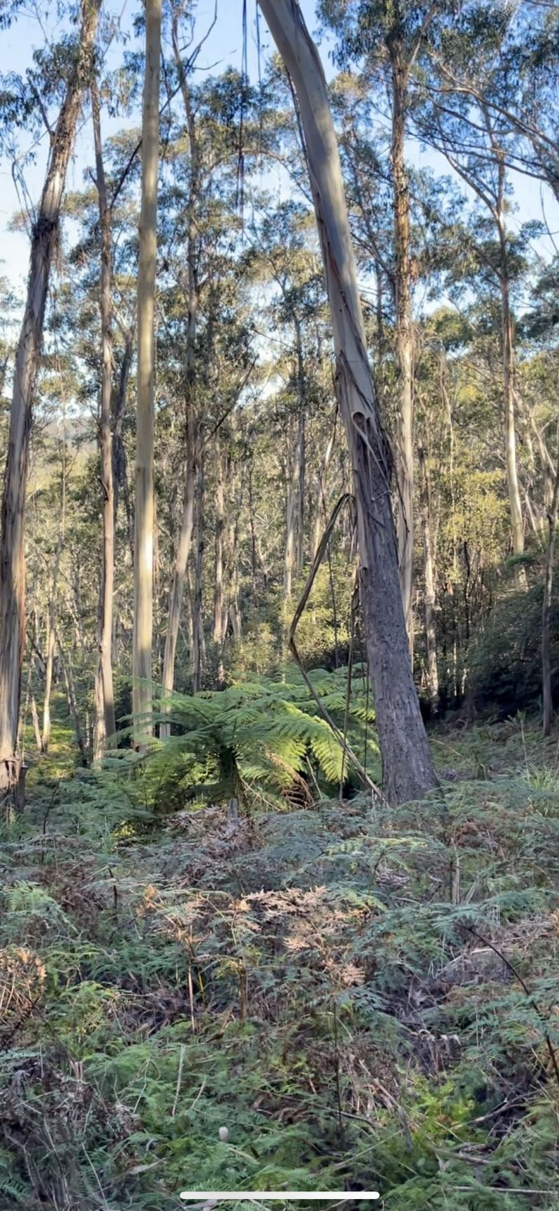 For Sale By Owner: 14 Nellies Glen Road, Katoomba, NSW 2780