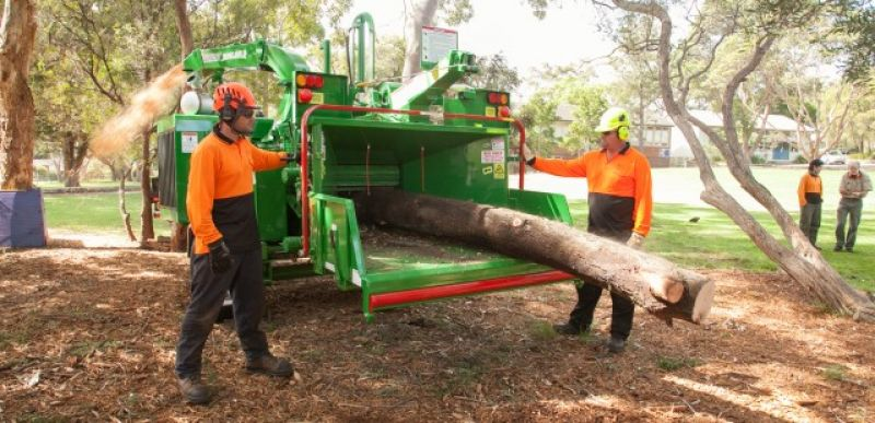 Well Established Tree Management Company.
