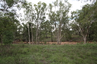 49.4 ACRES  -  PLENTY OF GRASS