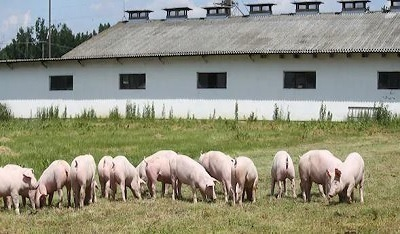 Piggery Business & Freehold in Riverina - Ref: 17138