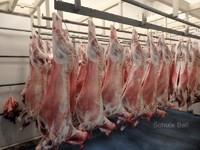 Moruya Abattoirs for Lease