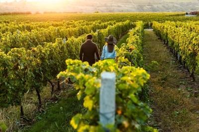 Vineyard Near Bendigo - Ref: 15914