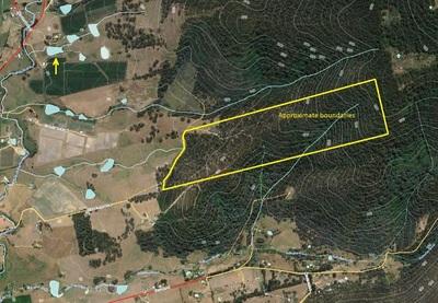 36 ha Bush Block Close to Cygnet