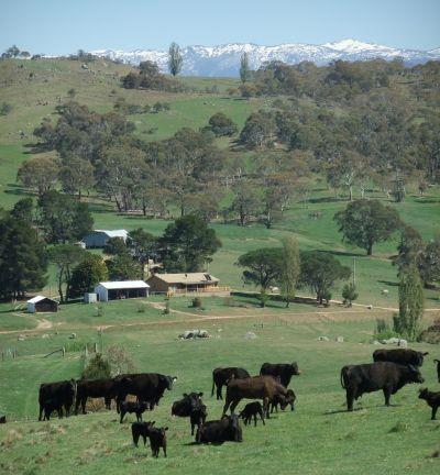 MOONBAH, NSW 2627