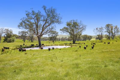 Grazing Property on 141.5 Acres (Approx)