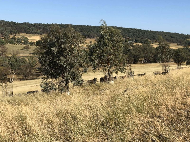 'ROTHESAY' - EXCELLENT GRAZING OR LIFESTYLE BLOCK (258 ACRES) WITH BUILDING PERMIT & PERMANENT WATER