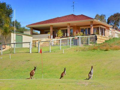 Preston Paradise Views, Views and plenty of Roo's