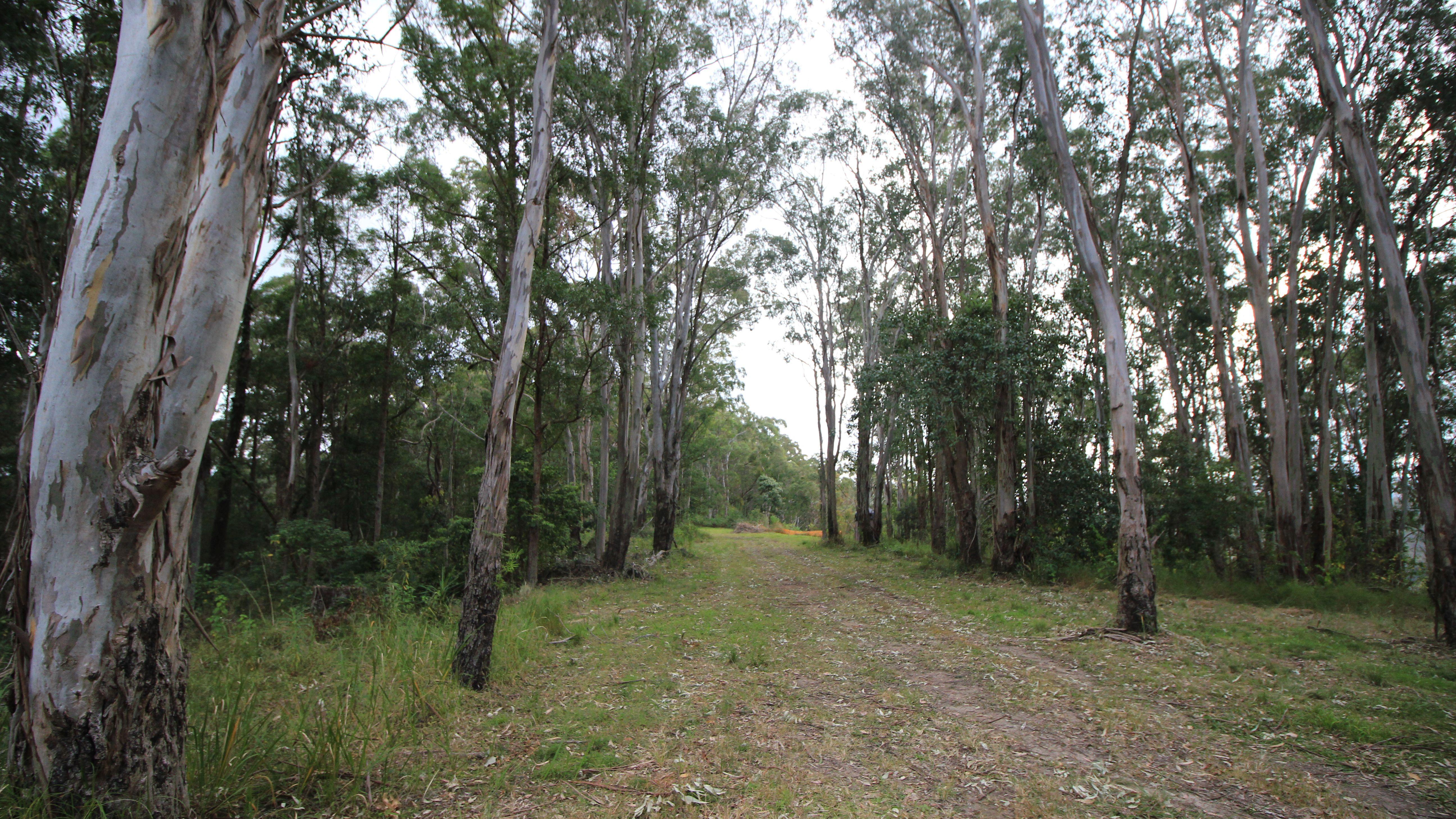 Lot 178 Lorne Rd, Batar Creek via, LORNE NSW 2439