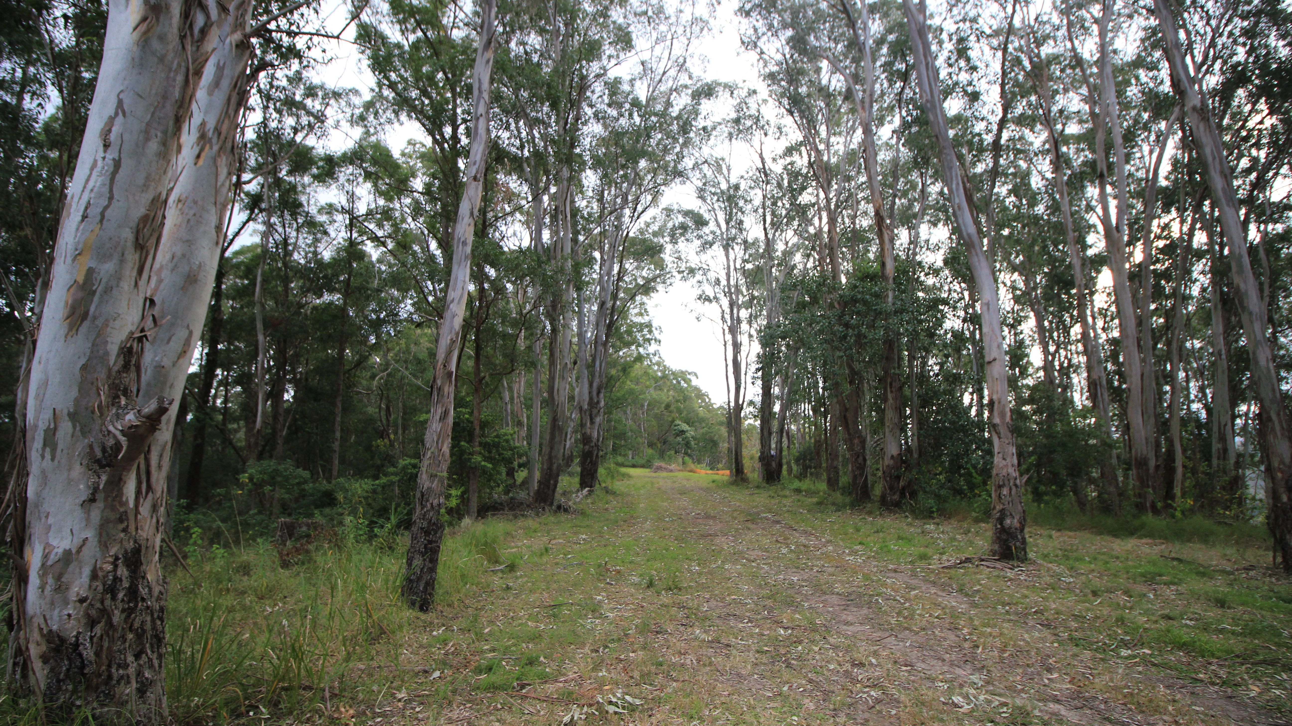 Lot 178 The Old Coach Rd, LORNE NSW 2439