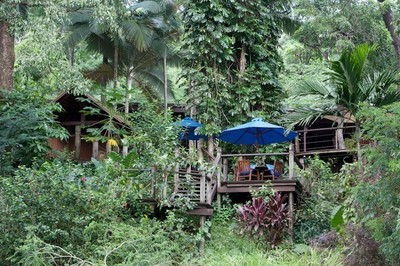 Bloomfield Lodge – where rainforest meets the reef