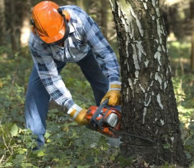 Great opportunity to secure a solid income stream in Tree & garden maintenance.