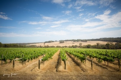 Exceptional Vineyard and Olive Grove on 42.33 Ha located in the Great Southern