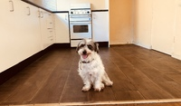 PET FRIENDLY - SUNNY TWO BEDROOM APARTMENT