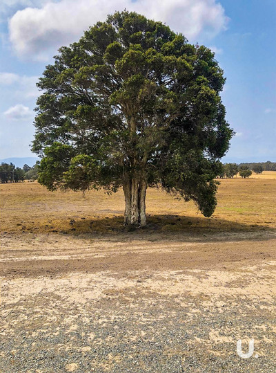 Nowra Hill Lot 1 Tea Tree Lane