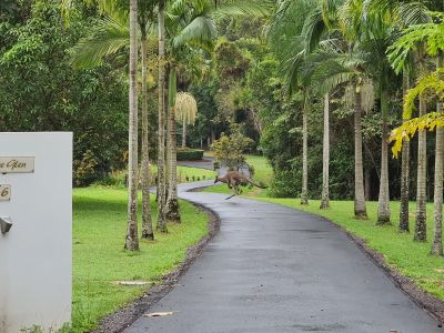 FOREST GLEN, QLD 4556