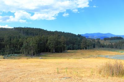 39 acres with stream frontage