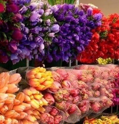 Florist/Cafe Near Hawthorn (Huge Potential) - Ref: 12129