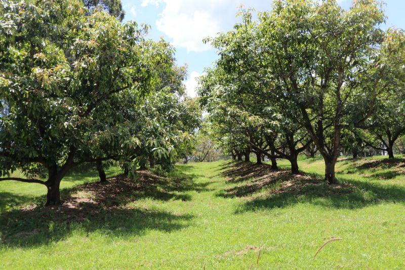 ESTABLISHED FARM + EQUIPMENT, & BEAUTIFUL SURROUNDS